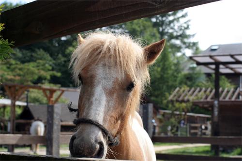 KIYOSATO-HORSE.jpg