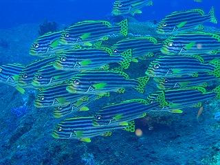 クルーズ シミラン ログ ダイビング phuket