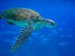 シミラン タイ クルーズ プーケット similan phuket diving