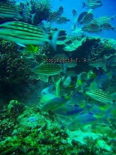 similan phuket diving シミラン クルーズ ログ