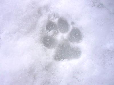 アッサムの足跡