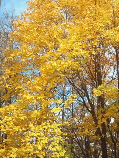 2011-11-2-1_convert_20111103161404.jpg