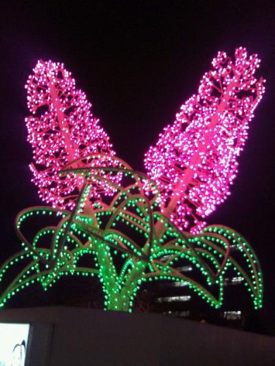 2011-11-29-13_convert_20111129185911.jpg