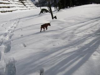 ここは雪深いなぁ~