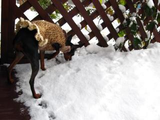 雪って味しないの?