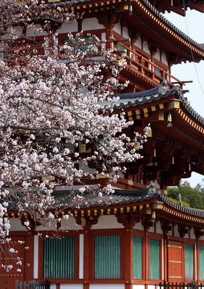 薬師寺 桜8