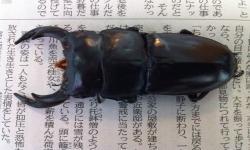 クワヨシ2号