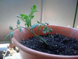 挿芽の挿芽0821