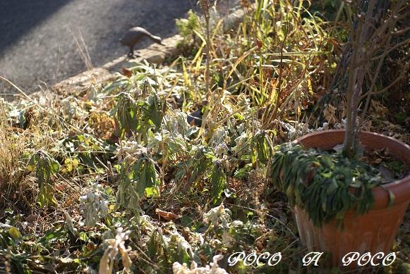 ボーダー花壇2