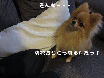 IMG_15876.jpg