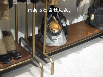 IMG_20077.jpg