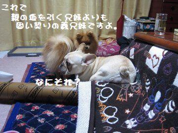 IMG_20332.jpg