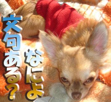 asahi5.jpg