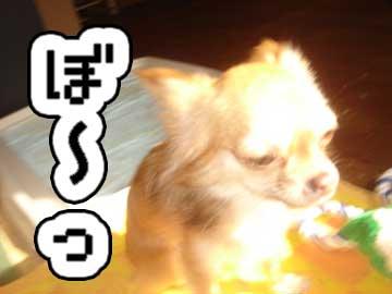 hikkoshi4.jpg