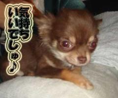 kimochi1.jpg