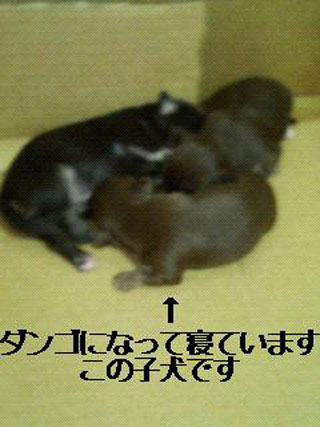 naka8.jpg