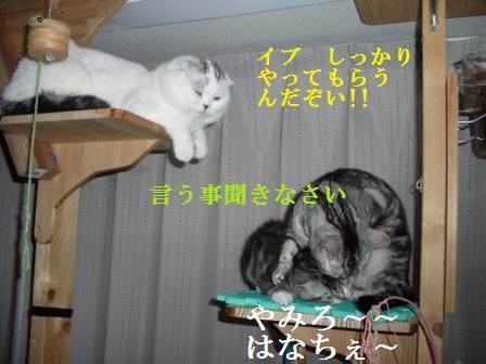 ねこ1月7日(月) 003