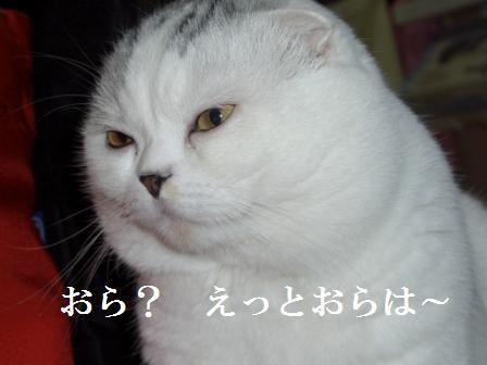 ねこ1月8日(火) 003