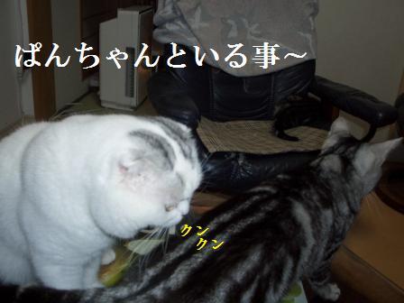 ねこ1月8日(火) 039