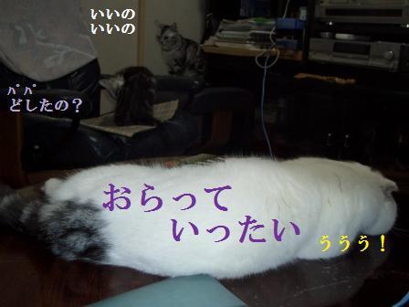 ねこ1月8日(火) 043