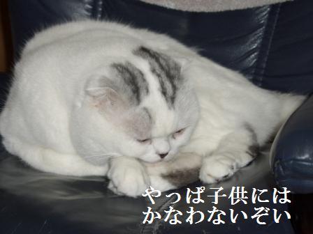 ねこ1月5日(土) 081