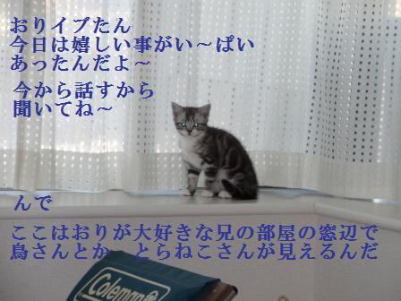 ねこ1月10日(木) 050