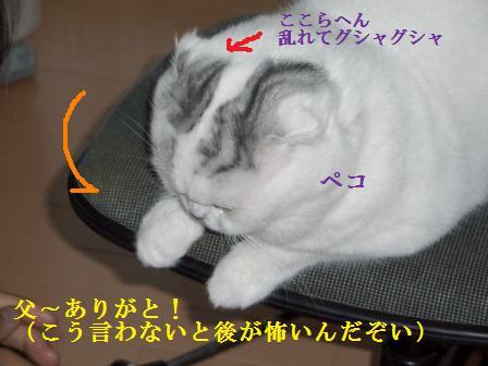 ねこ1月10日(木) 040