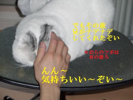 ねこ1月10日(木) 049
