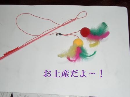 1月15日東高祝賀パレード・ねこ 022