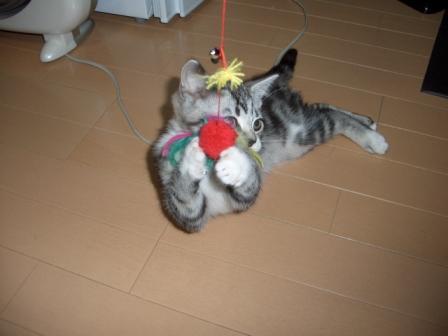 1月15日東高祝賀パレード・ねこ 031