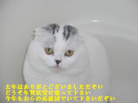 ねこ1月18日(金) 040