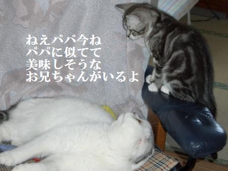 ねこ1月19日(土) 041