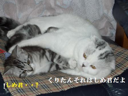 ねこ1月19日(土) 024