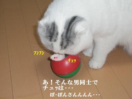 ねこ1月28日(月) 019