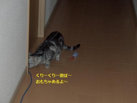 ねこ2月11日(月) 002