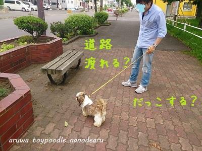 DSC_0904.jpg