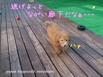 DSC_3952_201310142007492f6.jpg