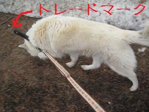 2012_0406_115711-IMG_7586.jpg