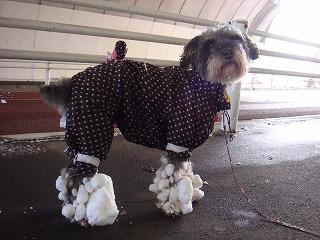 足に大きな雪玉が・・・