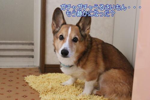 201111100002.jpg