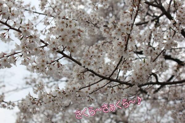 201204090005.jpg