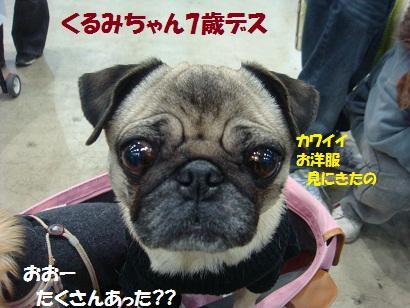DSC00972_20110527022502.jpg