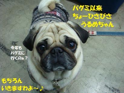 DSC00993_20110527031045.jpg