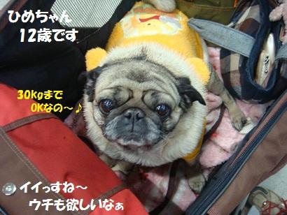 DSC01009_20110527031043.jpg