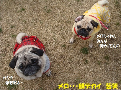 DSC01143.jpg