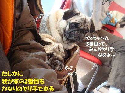 DSC01160_20110609005407.jpg