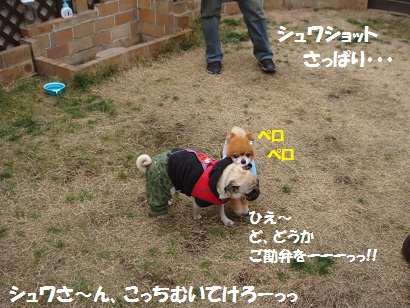 DSC01183_20110609004210.jpg