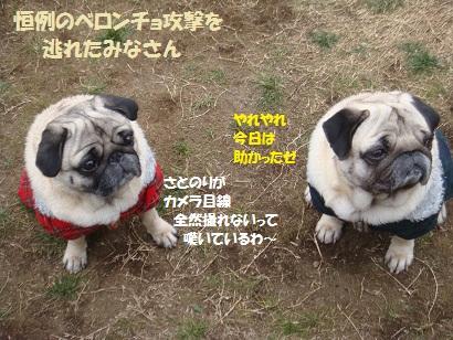 DSC01191_20110608214030.jpg