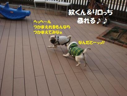 DSC01208_20110621051311.jpg