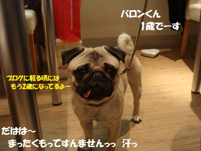 DSC01394_20110621050946.jpg